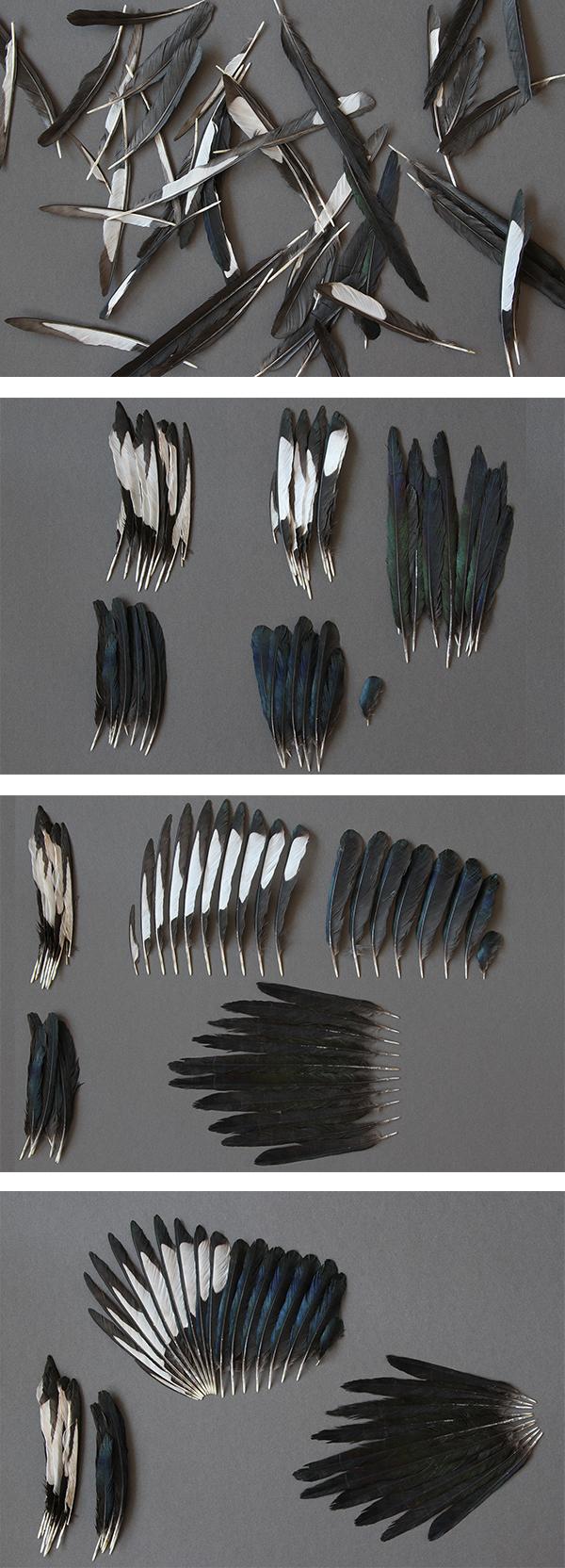 Lisa Pannek » Federn machen Vögel